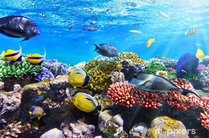 Coral and fish in the Red Sea.Egypt Vinyl Wall Mural - Destinations