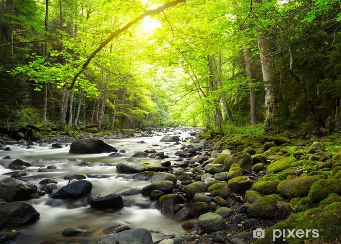 Fototapet av Vinyl Mountain River i skogen - Teman