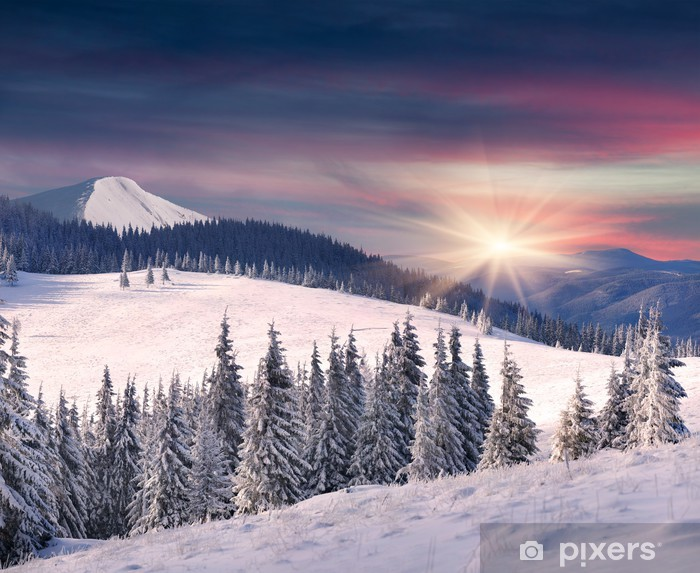 Trees covered with hoarfrost and snow in mountains. Sunrise Vinyl Wall Mural - Seasons