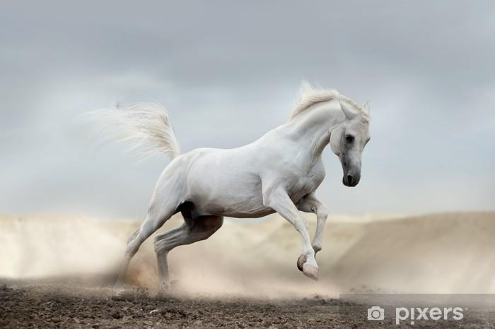 Vinyl Fotobehang Arabisch paard - Thema's
