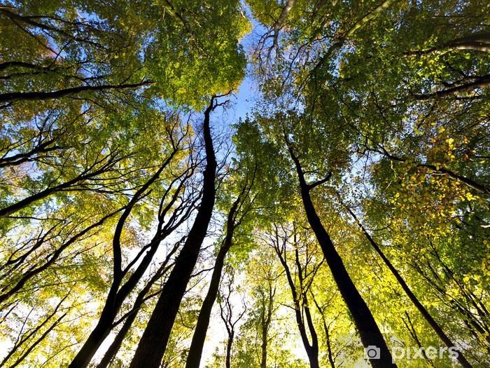 Papier peint vinyle Vue du ciel dans la forêt - Forêt