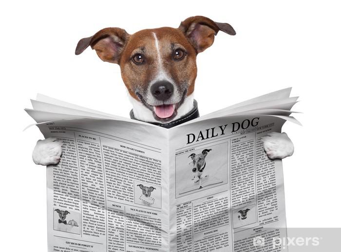 Fototapeta winylowa Gazeta pies - Naklejki na ścianę