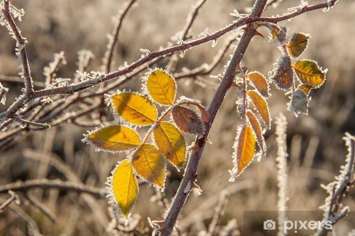 Vinyl-Fototapete Gefrorenen Blätter - Jahreszeiten