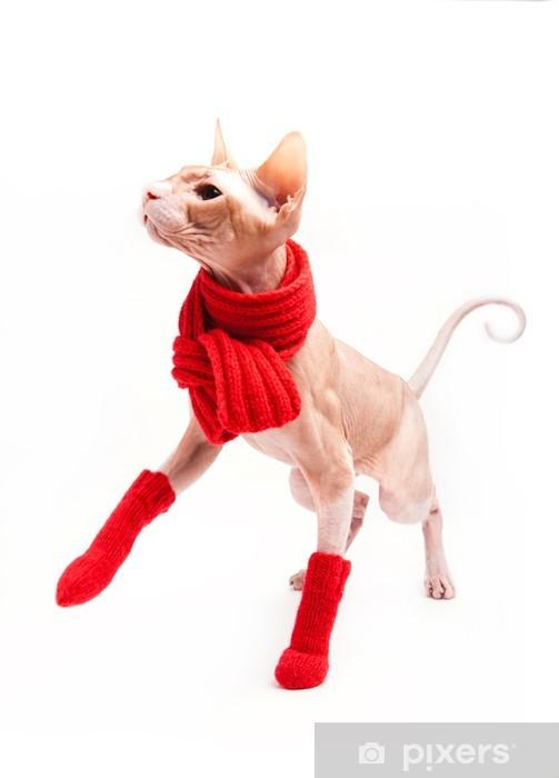 Naklejka Kot Sfinks Na Ciepło Z Czerwonym Szalikiem I Skarpetki