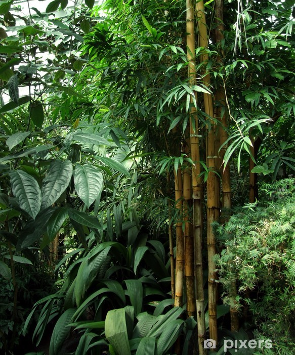 Tropisk drivhus landskab Vinyl fototapet -