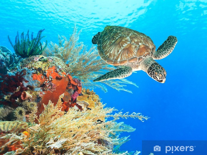 Pixerstick Sticker Schildpad en koraal - Bestemmingen