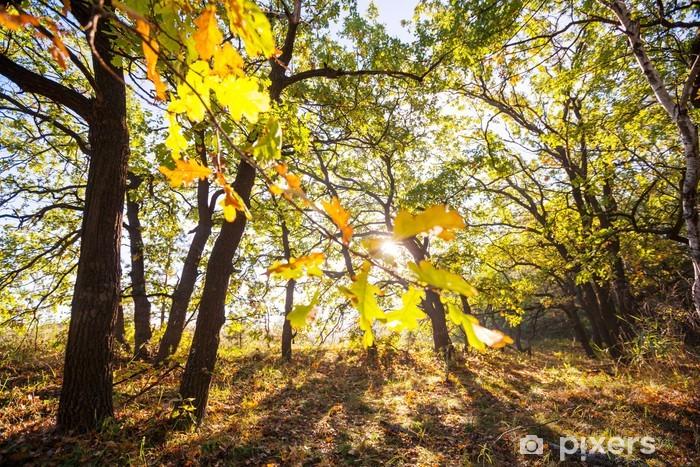 Naklejka Pixerstick Jesienny las - Pory roku