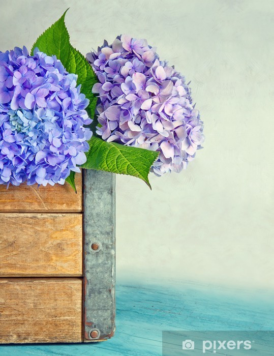 Blue hydrangea flowers in a wooden box Pixerstick Sticker - Flowers
