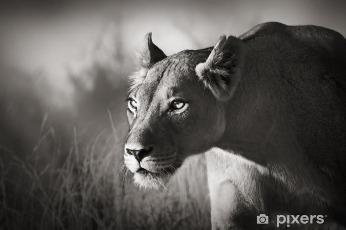 Lioness stalking Pixerstick Sticker - Themes