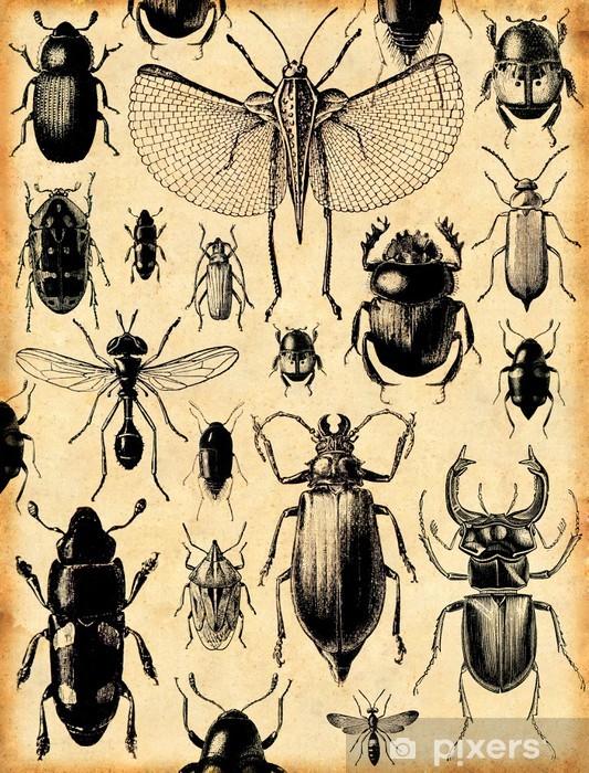 Fotomural Estándar Insectos fondo retro - Estilos