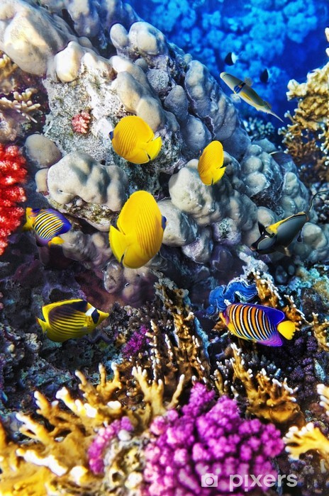 Coral and fish in the Red Sea. Egypt Vinyl Wall Mural - Themes