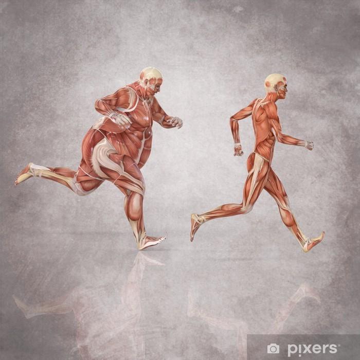 Anatomia Hombres Corriendo Vinyl fototapet - Kampe og Konkurrencer