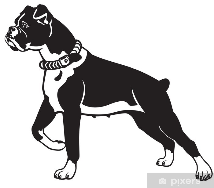 boxer dog black white Vinyl Wall Mural - Wall decals