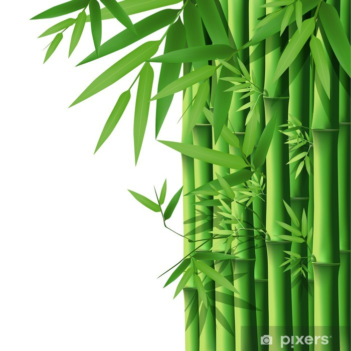 bamboo vector illustration poster pixers we live to change bamboo vector illustration poster pixers we live to change