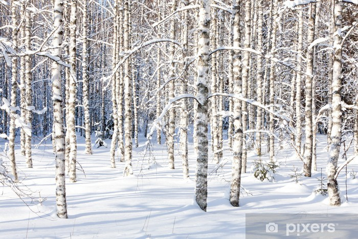Fototapeta winylowa Snowy pni brzozy - Style