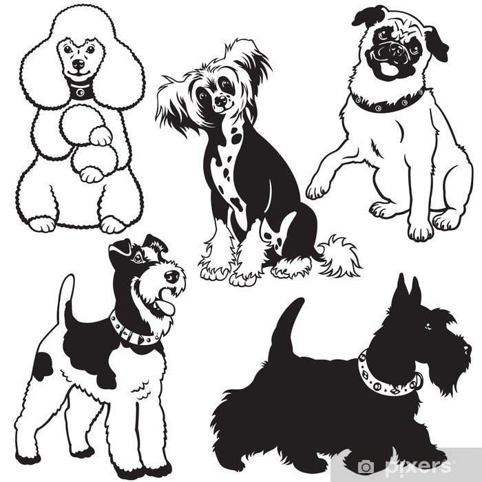 Plakat Zestaw z psów czarny biały - Ssaki