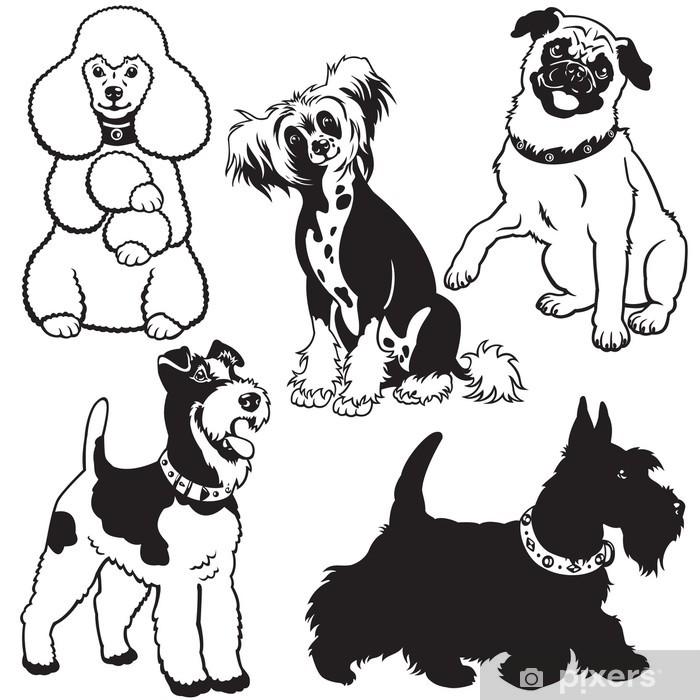 черно-белые картинки собак инвектор