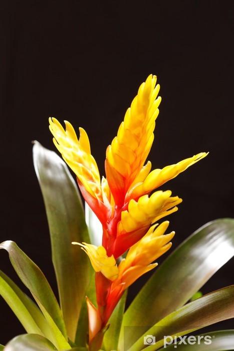 "Vinilo Pixerstick Ventana de plantas ""Vriesea splendens"" - Flores"