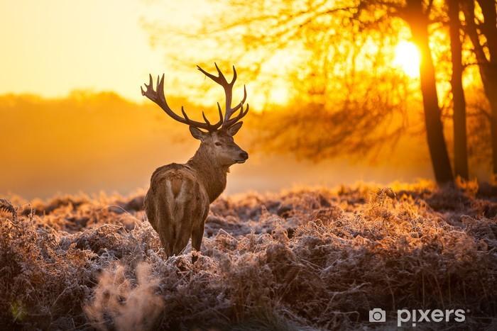 Papier Peint Autocollant Cerf dans le soleil du matin - Styles