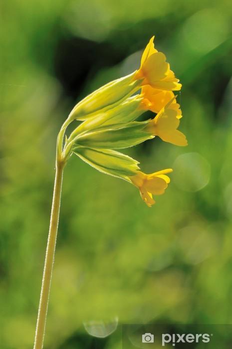 Nálepka Pixerstick Primula veris - Květiny