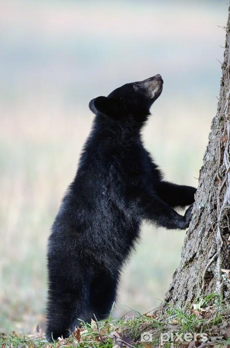 Carta da Parati in Vinile Nero americano cucciolo di orso - Temi