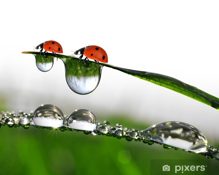 Tuore aamu kaste keväällä ruoho ja pieni leppäkerttu Vinyyli valokuvatapetti - Destinations