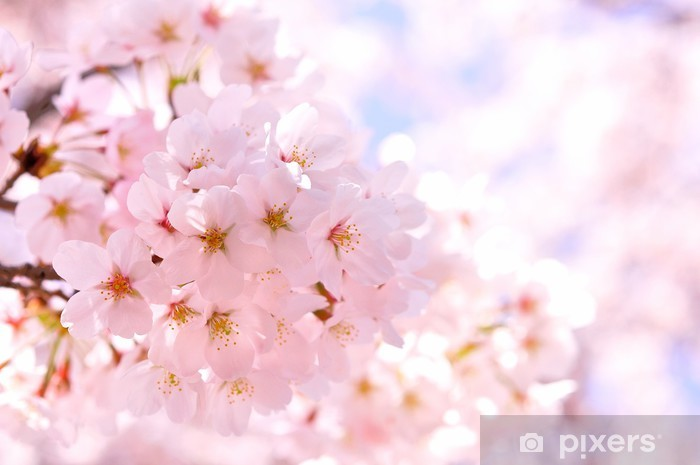 Sticker Pixerstick Sakura - Saisons