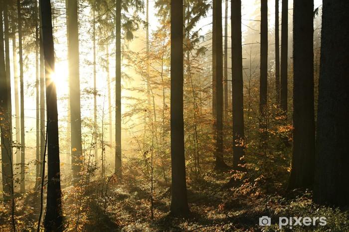 Pixerstick Sticker Herfst naaldhout bos op een mistige ochtend - Thema's