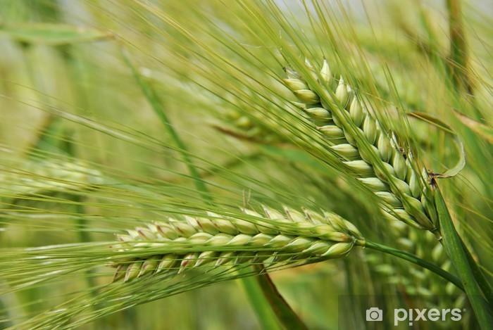 Fototapeta winylowa Espigas - Rolnictwo