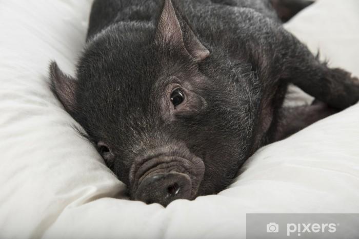 Sticker Pixerstick Un petit mensonge de porc noir mignon sur un oreiller blanc - Mammifères