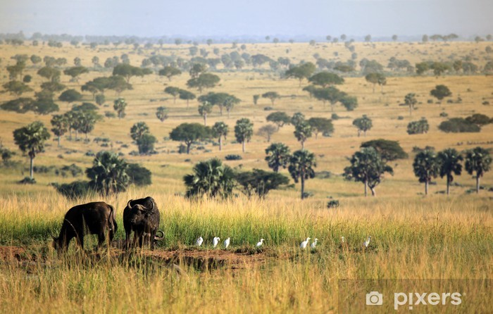 Papier peint vinyle Murchison Falls Buffalo - Ouganda - Afrique