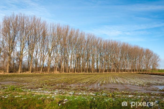 Fototapeta Winylowa Wiersz Nagie Drzewa Jesienią