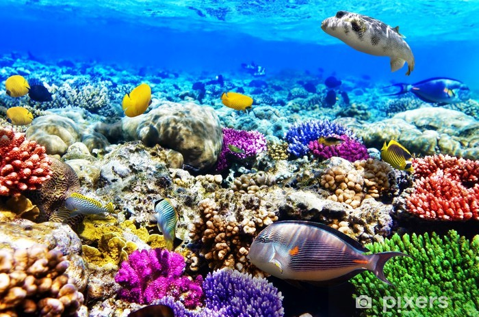 Coral and fish in the Red Sea. Egypt, Africa. Vinyl Wall Mural - Fishes