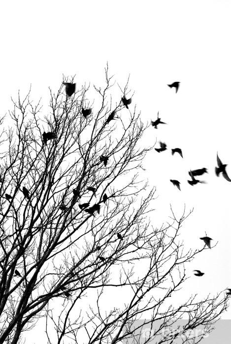 Carta da Parati in Vinile Uccelli che volano - Stili