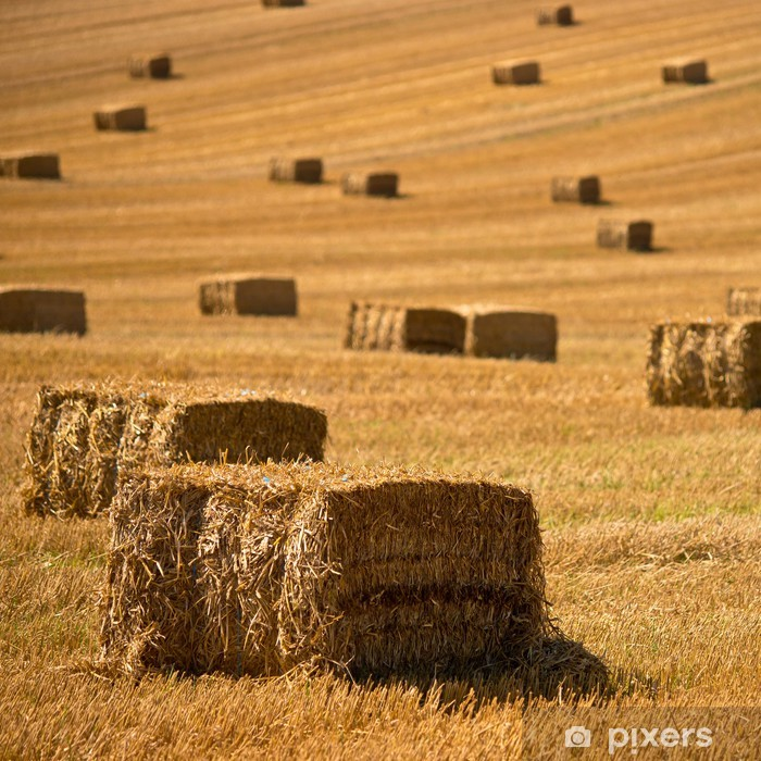 Straw bales background Poster - Agriculture
