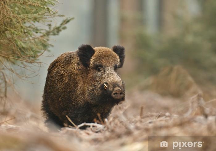 Sticker Pixerstick Sanglier dans la forêt bavaroise - Mammifères