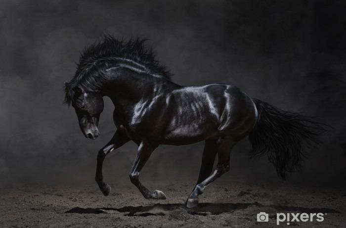 Fototapeta winylowa Czarny koń galopujący na ciemnym tle -