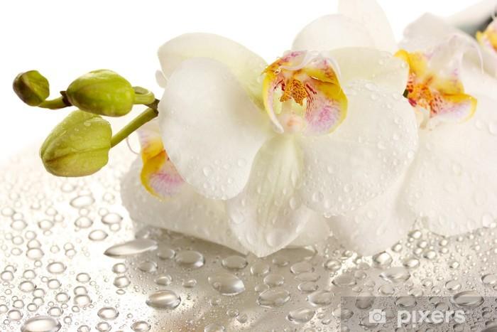 Papier peint vinyle Blanc belle orchidée avec des gouttes - Thèmes