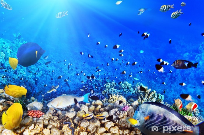Coral and fish in the Red Sea.Egypt Pixerstick Sticker - Themes