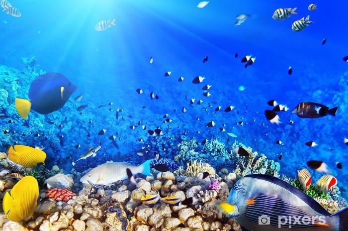 Pixerstick Sticker Koraal en vissen in de Rode Zee, Egypte - Thema's