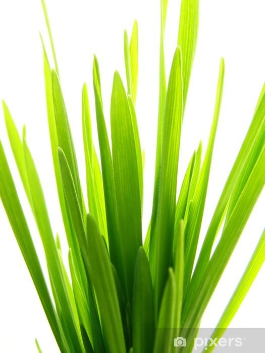 Papier peint vinyle Paille d'herbe verte - Saisons