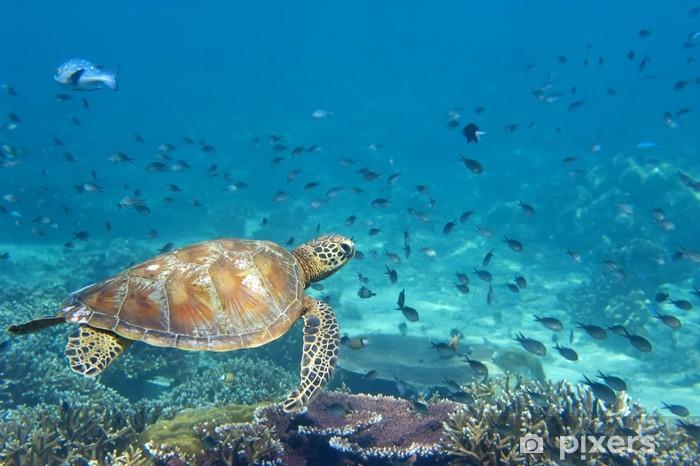 Papier peint vinyle Une tortue de mer portrait de près tout en vous regardant - Poissons