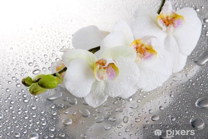 Carta da Parati in Vinile Bianco, orchidee bellissime con gocce - Temi