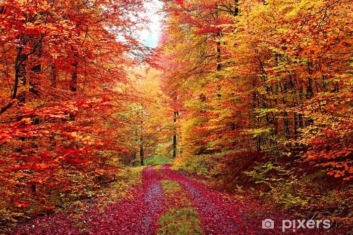 Sticker Pixerstick Magnifique couleurs d'automne forêt en Octobre - Thèmes