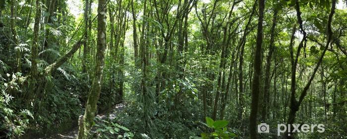 Fototapeta winylowa Chmura lasów w Kostaryce - Ameryka