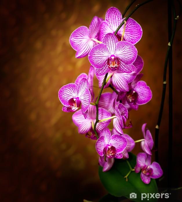Vinilo Pixerstick Orchid - Temas