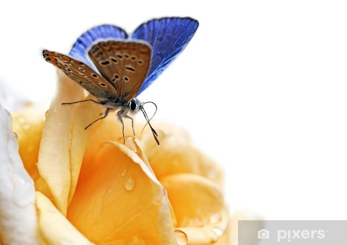 Carta Da Parati Farfalla Blu Isolato Su Sfondo Bianco Pixers