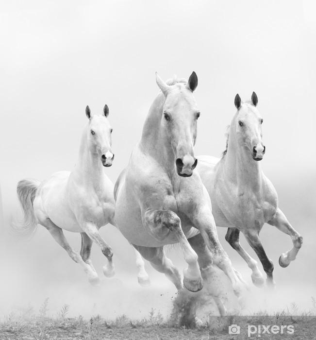 Fototapeta winylowa Białe konie w kurzu -