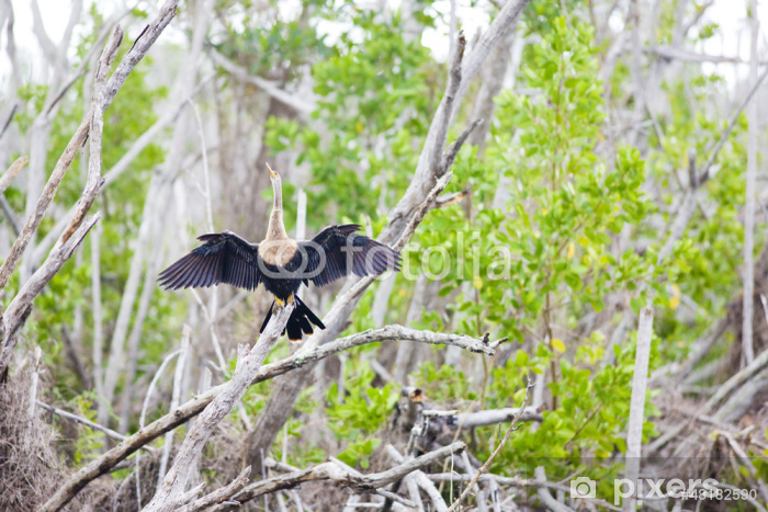Naklejka Pixerstick Fauna Parku Narodowego Everglades, Floryda, USA - Ameryka