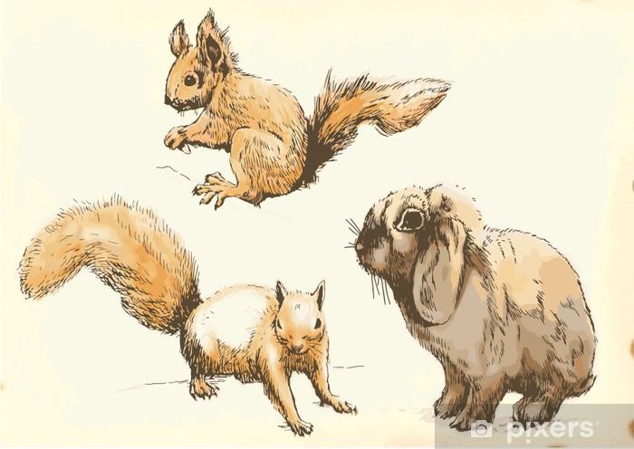 mladé veverky